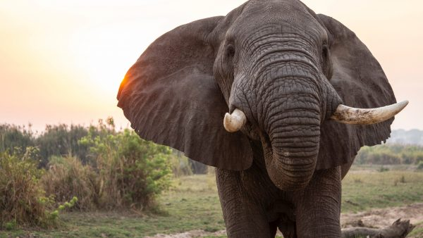 How To Eat an Elephant—Byte-Size Advice for Making Your Next Big Technology Purchase